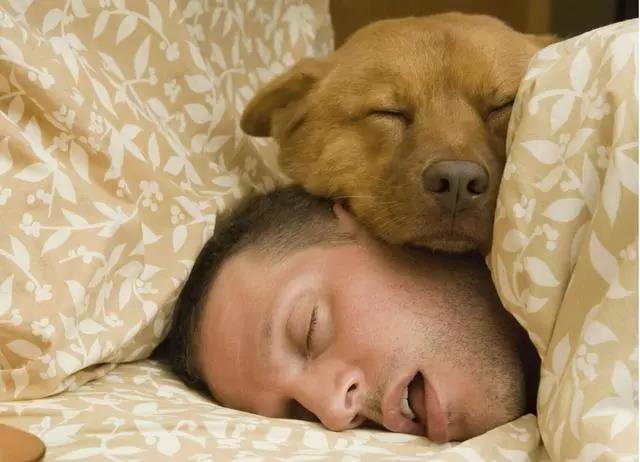 睡眠的苦涩与甜蜜—浅谈睡眠那点儿事